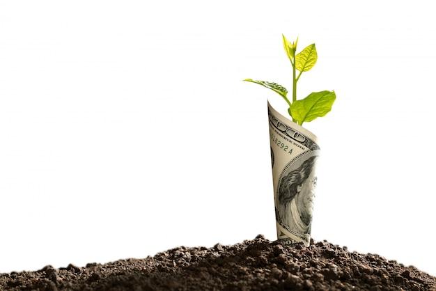 Beeld van amerikaanse dollarbankbiljet met installatie het groeien bovenop voor zaken