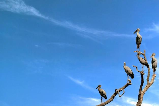 Beeld van aziatische openbillooievaar op de tak op de hemelachtergrond