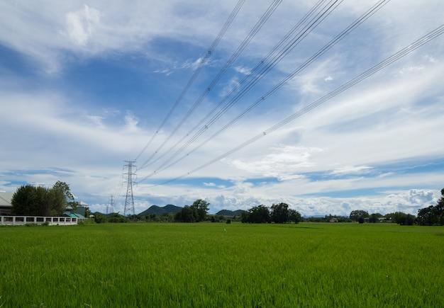 Beeld van groen padieveld met blauwe hemel in platteland
