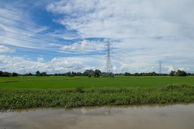 Beeld van groen padieveld met blauwe hemel
