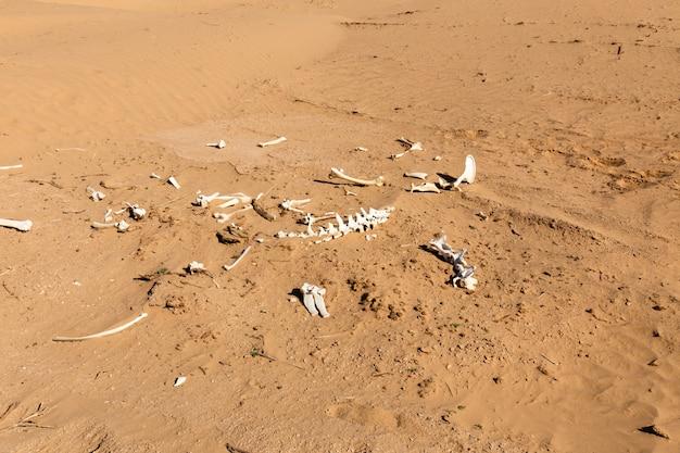 Beenderen van een dier in de woestijn