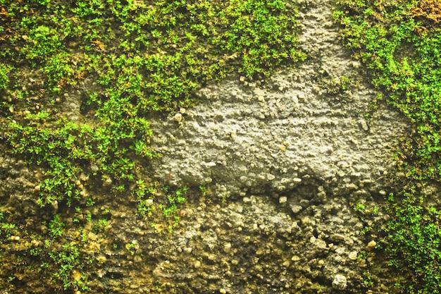 Behang close-up in openlucht ruwe textuur