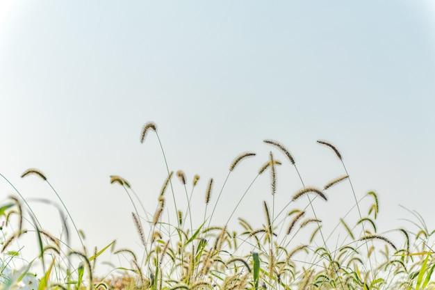 Behang leven bloemen horizontale landbouw