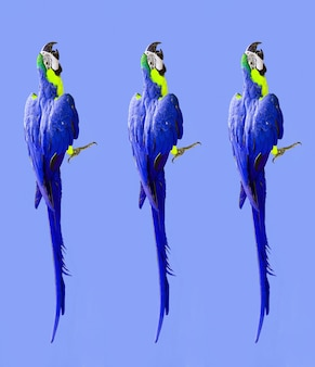 Behang met ara papegaaien foto modern patroon op kleurrijke achtergrond