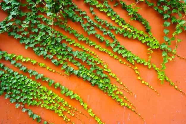 Behang patroon groei grens verlaat de natuur