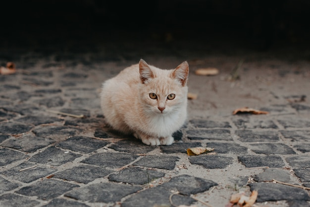 Beige kat buiten