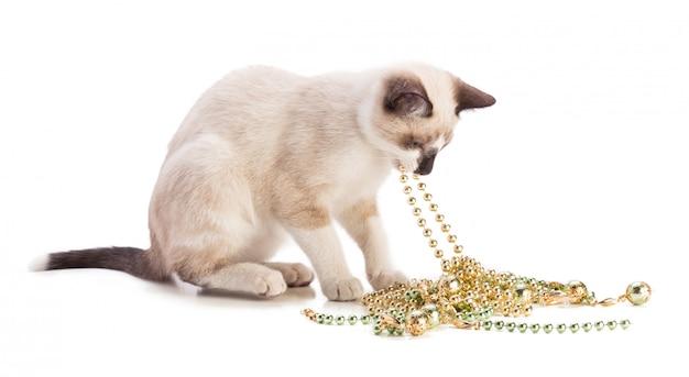 Beige kitten spelen met een parelketting