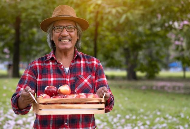 Bejaarde tuinman die en appelen op een houten doos na het plukken van appellandbouwbedrijf glimlachen houden