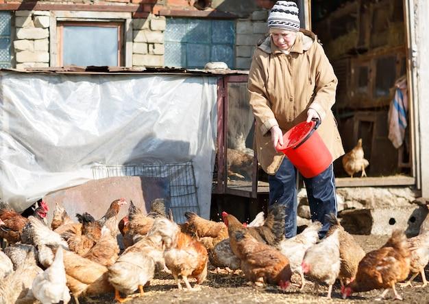 Bejaarde vrouw voedende kippen