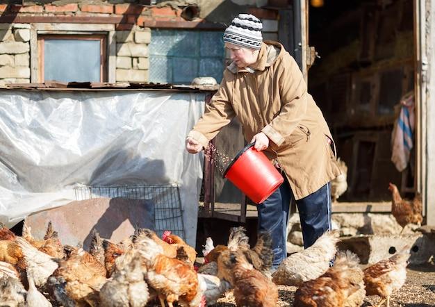 Bejaarde vrouw voederen van kippen uit een emmer met graan