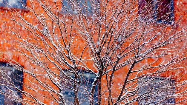 Bekijk boom witte sneeuw in het vallen. gelegen in loft-appartementen. rode bakstenen huis op achtergrond
