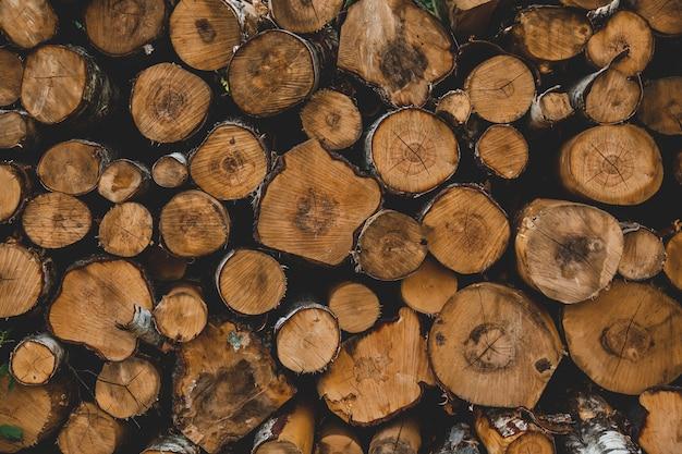 Bekijk op stammen in een bos, sudeten, polen