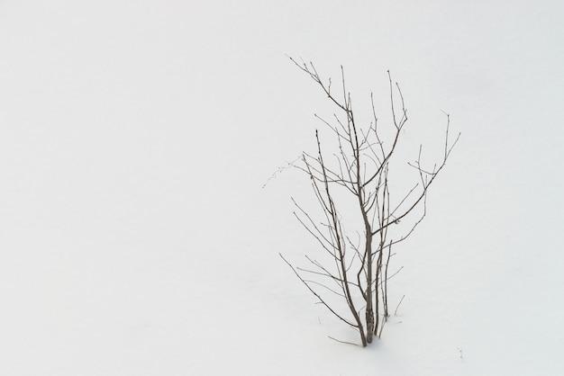 Bekijk van bovenaf op boom met gevallen bladeren op witte schone sneeuw