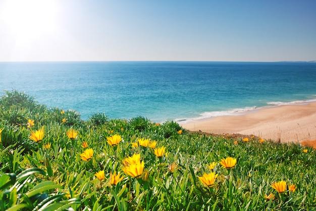 Bekijk zeegezicht met gele bloemen en gras. portugal, algarve.
