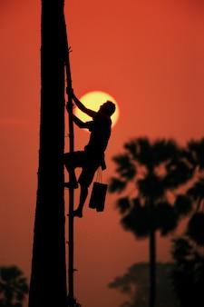 Beklim de palmboom