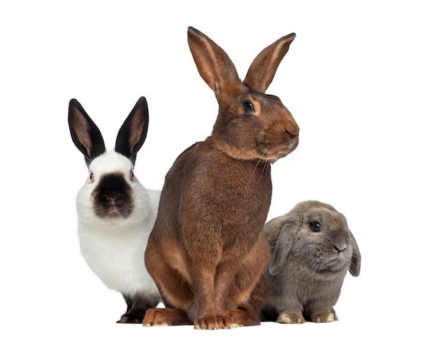 Belgische haas en russisch konijn en holland snoeit konijn geïsoleerd op een witte ondergrond