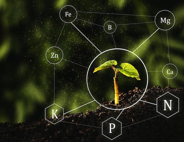 Bemesting en de rol van voedingsstoffen in het plantenleven met pictogram voor digitale minerale voedingsstoffen