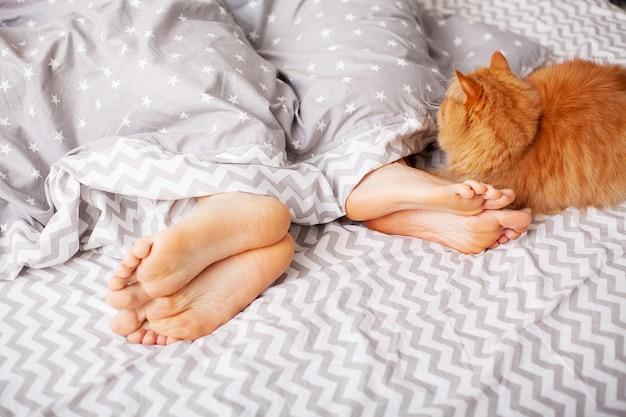 Benen van geliefden onder deken en rode kat zitten op bed