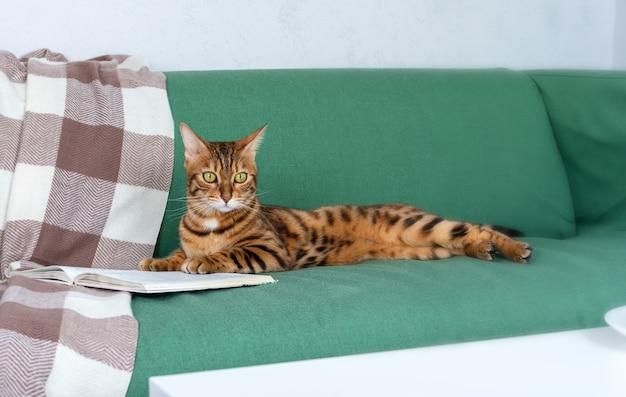 Bengaalse kat die thuis op een groene bank rust en een boek leest