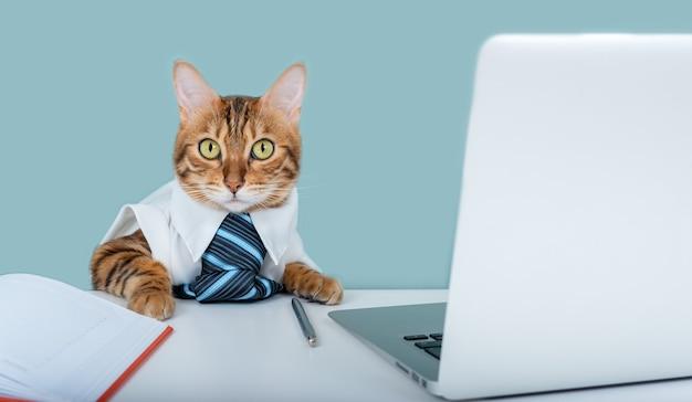 Bengaalse kat in een overhemd en stropdas zit aan een werktafel. kantoormedewerker