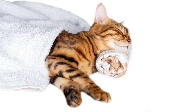 Bengaalse kat slaapt, zijn hoofd rustend op een handdoek geïsoleerd op een witte achtergrond