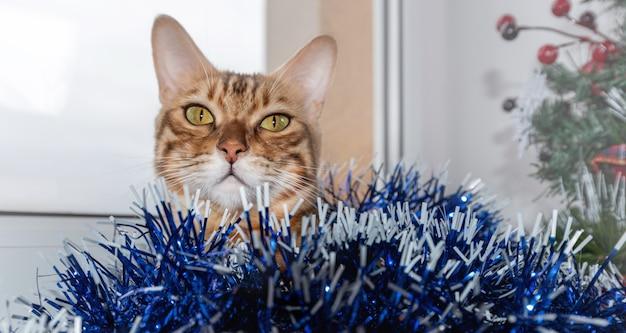 Bengaalse kat spelen met slinger en klatergoud onder kerstboom. kerstmis en nieuwjaar concept