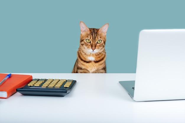 Bengaalse kat zit op een tafel omringd door een notitieboekje met een pen en een computer. zaken doen vanuit huis
