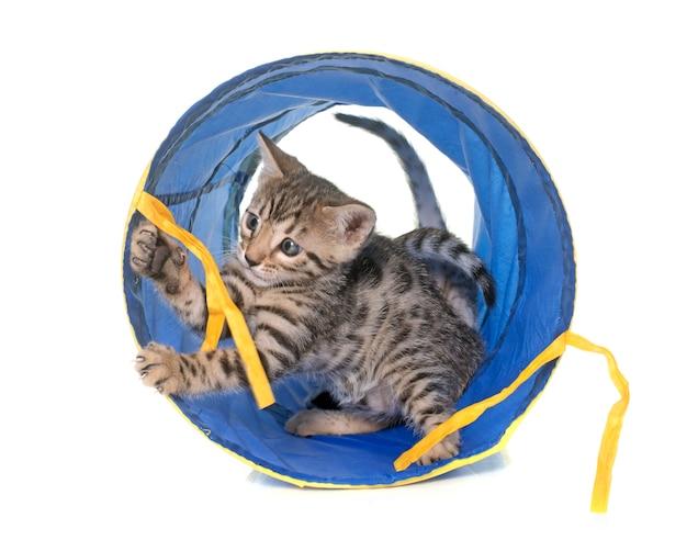 Bengaalse kitten in de tunnel