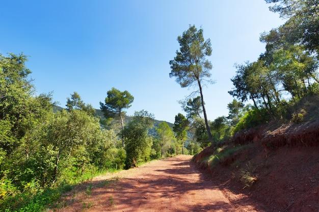 Bergachtige weg en pijnbomen. montseny