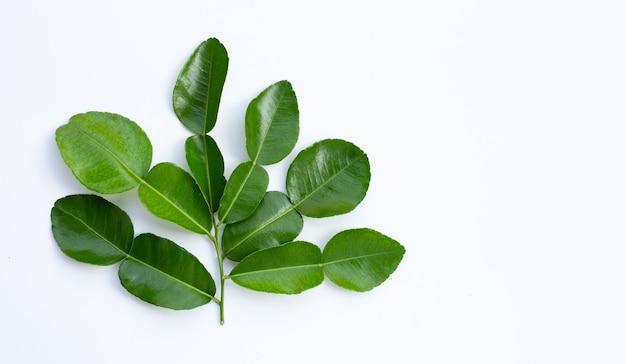 Bergamot kaffir limoenblaadjes kruid vers ingrediënt geïsoleerd op een witte achtergrond.