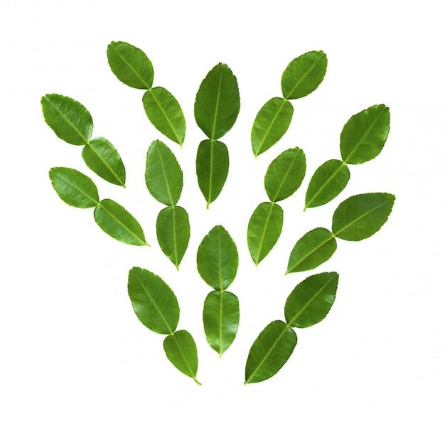 Bergamot of kaffir-limoenblad op wit