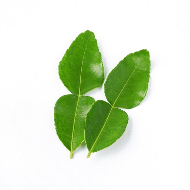 Bergamotblad geïsoleerd op een witte achtergrond