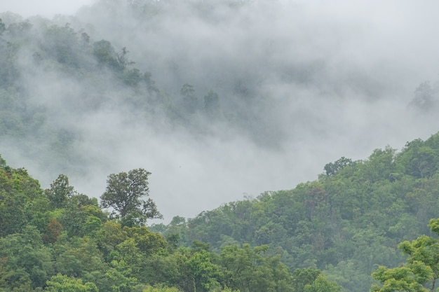 Bergbos in de mist na regen