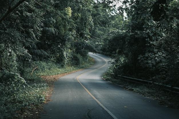Bergbossen, wegen met dichte dennenbossen in de bergen in chiang rai, thailand, waar de natuur het meest is.