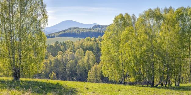 Bergen bedekt met bos, zonnige zomerdag