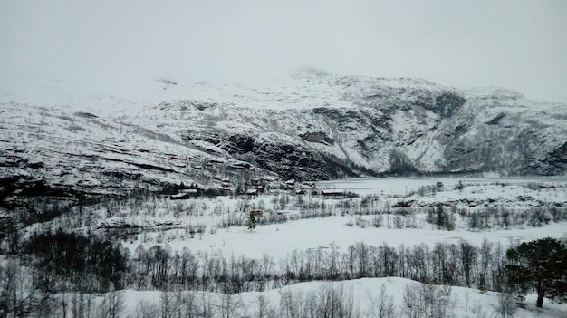 Bergen en bomen bedekt met sneeuw in de winter