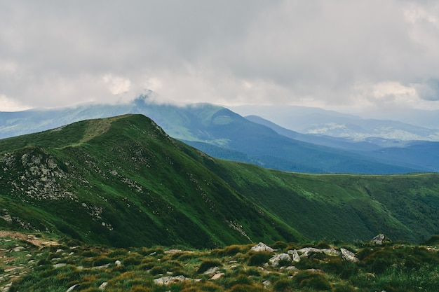 Bergen en vlaktes met groen weelderig gras en stenen. bergbos in de mist van wolken. berg boslandschap.