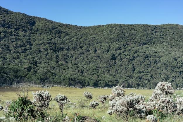 Bergen met uitgestrekte savanne