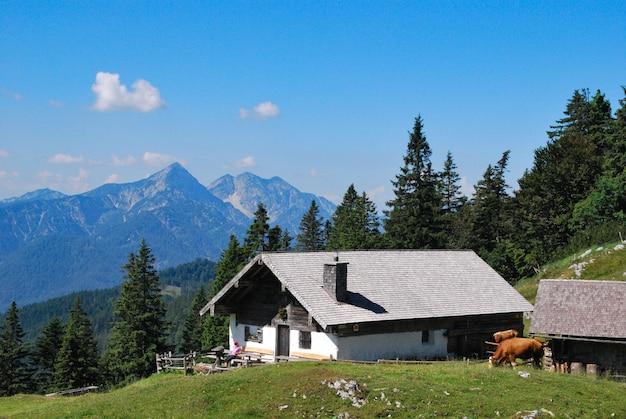 Berghut kohler alm bij inzell, met sonntagshorn bij chiemgauer alpen