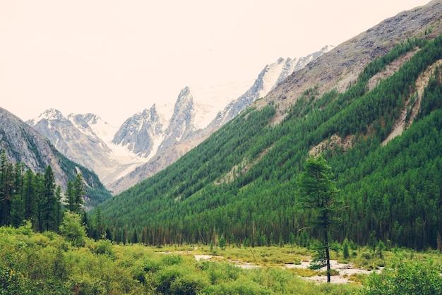 Bergkreek in vallei tegen besneeuwde bergen