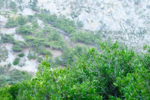 Berglandschap met bomen en struiken