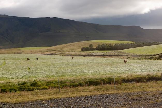 Berglandschap met glooiende heuvels en een bosje bomen, met vee grazend in de wei