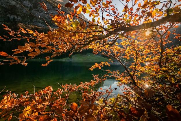 Berglandschap met klein meertje in zwitserland.