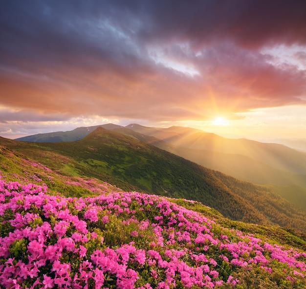Berglandschap met roze bloemen bij zonsondergang