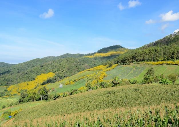 Berglandschap met terras maïs veld in meahongson, thailand