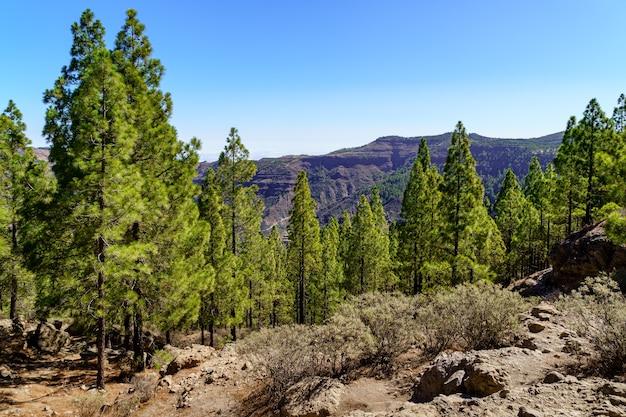 Berglandschap op gran canaria, woestijnlandschap van valleien en bergen die eindigen in de zee. europa.