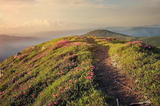 Bergpad door rododendron bloemen