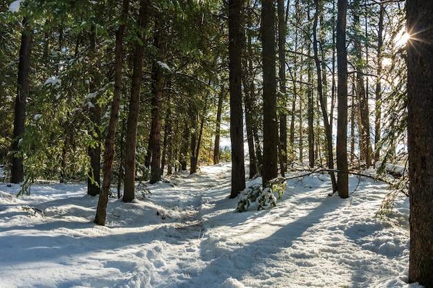 Bergpad in de winter zonnige dag ochtend. zonlicht dat op bomen in bos valt.