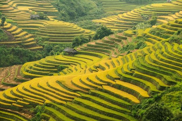 Bergrijst aanplant rijstvelden op het terras van het dorp cang chai, vietnam.