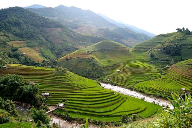 Bergrijst in vietnam